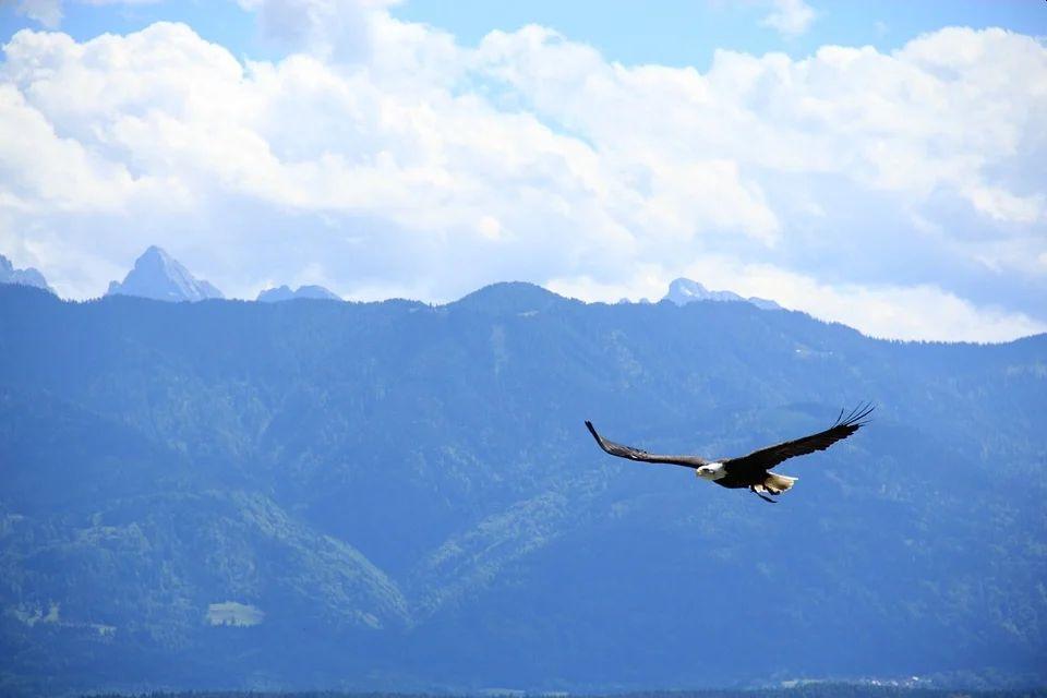 Eine Weisheitsgeschichte: Adler oder Huhn?
