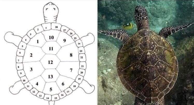 Die mystische Bedeutung des Schildkrötenpanzers - 13 Monde und 28 Tage